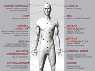 Ayurveda Sistemas Humano